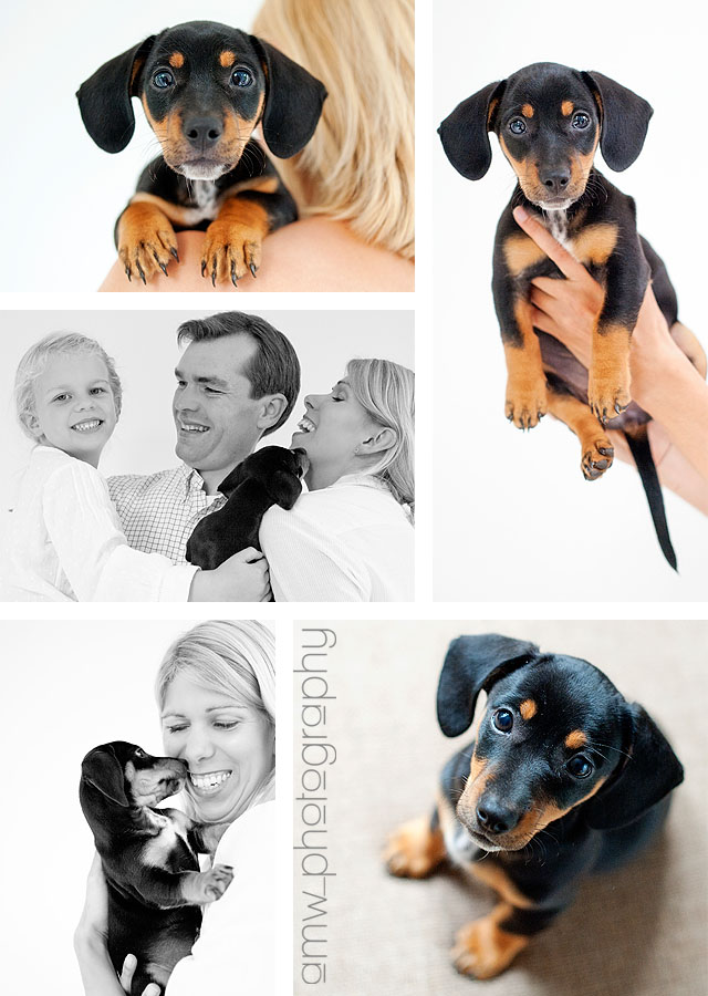 familienfotografie tierfotografie hundefotografie hanau frankfurt